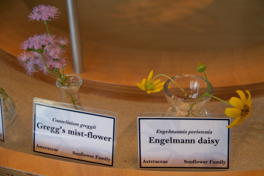 Scientific names of wildflowers at Ladybird Johnson Wildflower Center, Austin, TX